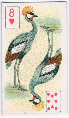Birds of brilliant plummage (playing cards)