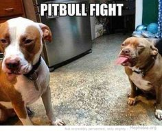 I saw these vicious fights all the time in my line of work.  They are hard too. .. ...          Keep a straight face through.  Horrible, vicious.dogs.  Try not to loose your composure and laugh.