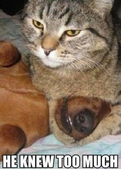 Murderous Cat