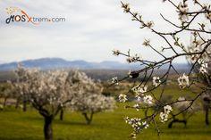 Almendro en Flor 2015 - Garrovillas de Alconétar (Cáceres)