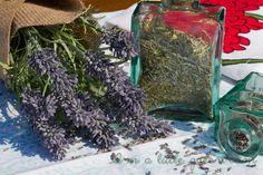 Herbes de Provence Seasoning Blend #seasoningblend #seasoning #herbs #herbesdeprovence