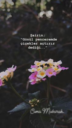 (notitle) - Fatime Zehra - #Fatime #notitle #ZEHRA Emoji Pictures, Learn Quran, Some Words, Good Vibes, Book Quotes, The Dreamers, Islam, Literature, Poems