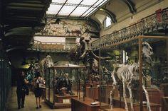 Natural History Museum Paris