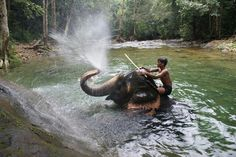 Koh Chang, Elephant's swimming