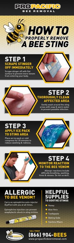 A visual guide for correctly treating a bee sting. Includes tips on soothing and… A visual guide for correctly treating a bee sting. Includes tips on soothing and preventing allergic reactions to bee venom. See full image at propacificbeeremo… Treating Bee Stings, Remedies For Bee Stings, Bee Removal, Wasp Removal, Health Tips, Health And Wellness, How To Remove, How To Apply, First Aid