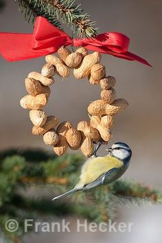 Blue tit, feeding birds, feeding in winter with snow, on nut ring . Christmas Bird, Simple Christmas, Christmas Ornaments, Bird Feeders For Kids To Make, Bird Feeder Craft, Bird Seed Ornaments, Homemade Bird Feeders, Birds And The Bees, Bird Tree