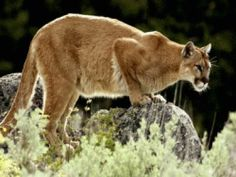 Animal Sightings in Big Bend
