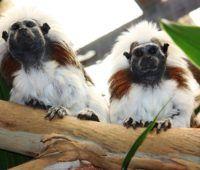 Tamarind Monkeys Butterfly House, Tropical Birds, Tamarind, Monkeys, Farm Animals, Good Books, Creatures, Fun, Rompers