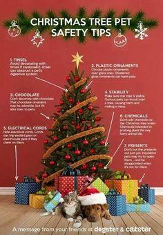 Christmas Tree Pet Safety.