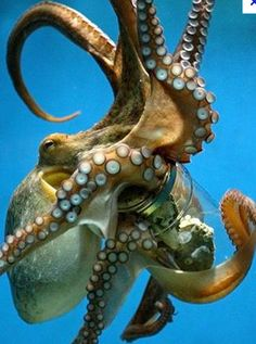 <3 octopuses