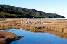 Marahau Wetlands, Abel Tasman, Nelson Region, New Zealand Royalty Free Stock Photo Abel Tasman National Park, New Zealand Landscape, Turquoise Water, Image Now, Wilderness, National Parks, Landscapes, Scenery, Royalty