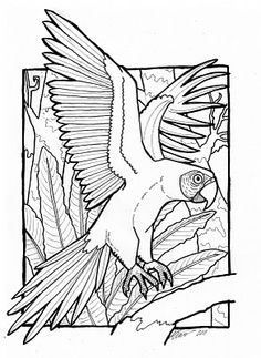 1000 images about coloring pages on pinterest coloring for Scarlet macaw coloring page