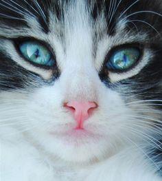 Beautiful!  #cats