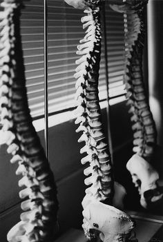 """A favorite bit of yogi wisdom: """"You're only as young as your spine.""""  spines by Brother O'Mara, via Flickr"""