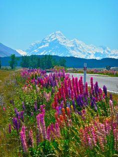 Free Image on Pixabay - Flowers, Alpine, Mountains, Nature Free Pictures, Free Images, Alpine Mountain, Mount Rainier, Mountains, Nice, Nature, Flowers, Travel