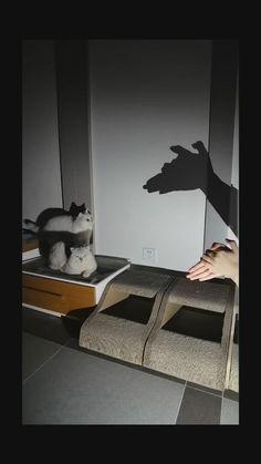 Funny Cute Cats, Cute Cat Gif, Cute Funny Animals, Best Cat Litter, Cat Shelves, Cat Room, Siamese Cats, Kittens, Cat Tattoo