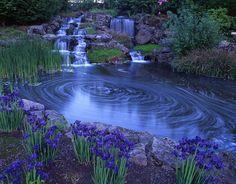 The Oregon Garden   Flickr - Photo Sharing!