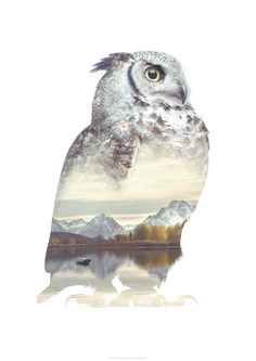 Faunascapes OWL Animal Double Exposure Art Print by WhatWeDo available on http://etsy.faunascapes.dk