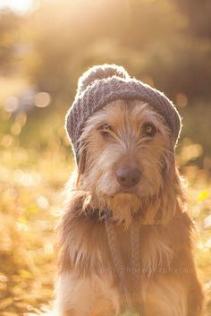 Scruffy Dog sporting a Touque! By Brittany Howard