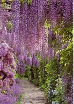 Somewhere Over the Rainbow / Garden, Flowers, Flowerfields, Parks - postcards for swap - OpenSea - Picasa We on imgfave Love Flowers, Beautiful Flowers, Beautiful Places, Purple Flowers, Hanging Flowers, Hanging Plants, Simply Beautiful, Rain Garden, Dream Garden