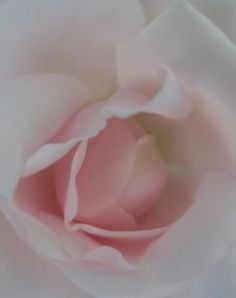 .hint of pink...rose