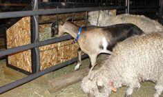 Feeder Designs - The Pack Goat Forum