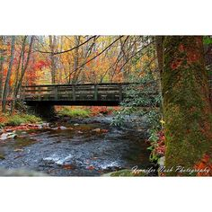 Bridge in the Cataloochee Valley Great Smoky Mountains National Park near Waynesville, NC. Photo by Jennifer Lambert Nash. #bridge #bridges #smokymountains #greatsmokymountainnationalpark #creek #fallcolors #changingleaves #river #nature