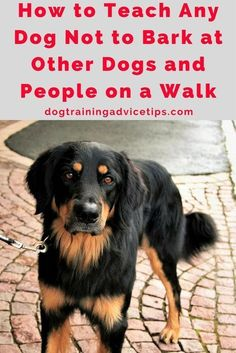 How to Teach Any Dog Not to Bark at Other Dogs and People on a Walk | Dog Training Tips | Dog Obedience Training | Dog Training Ideas | http://www.dogtrainingadvicetips.com/teach-dog-not-bark-dogs-people-walk #DogsTraining #dogtraininghacks