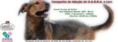BONDE DA BARDOT: RJ: Campanha de Adoção do G.A.R.R.A. e LARC (Lar de Chiquinho), acontece neste sábado, na Barra da Tijuca (07/01)