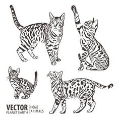 Find Cats Collection Vector Silhouette Vector Illustration stock images in HD and millions of other royalty-free stock photos, illustrations and vectors in the Shutterstock collection. Thousands of new, high-quality pictures added every day. Cat Silhouette, Silhouette Vector, Cat Vector, Vector Art, Cat Outline Images, Illustration, Royalty Free Stock Photos, Clip Art, Collection