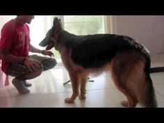 How to teach any dog to FETCH! - YouTube Dog Clicker Training, Agility Training For Dogs, Dog Training Videos, Training Your Puppy, Dog Agility, Dog Hacks, Pet Life, Old Dogs, Service Dogs