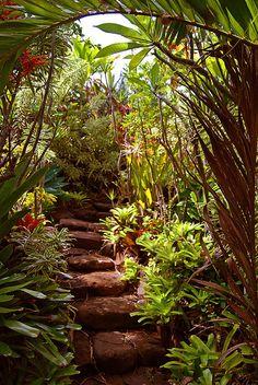 Jungle Stairs by twenty2wo, via Flickr