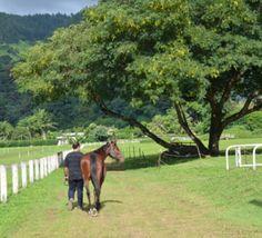 Relancer+les+courses+de+chevaux,+le+grand+défi+de+l'hippodrome
