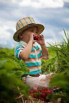 Sara Callow Photography : Strawberry Picking : Toddler Photo Shoot : Photographer : Strawberries