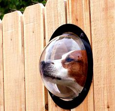 Dog peep-hole