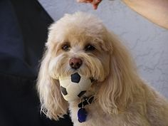 Mr. Divot Maisano with his favorite toy, a soccer ball.