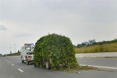 Une voiture abandonnée recouverte par la vigne - 2Tout2Rien