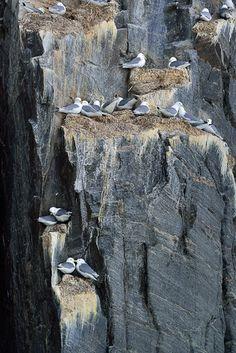 nunavut bird sanctuaries