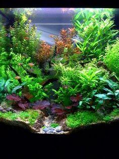 Un peu trop jungle à mon goût mais joli mélange de plantes