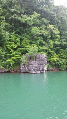 """Our """"Jump Rock"""" at full pool at point 7 on Norris  Lake."""