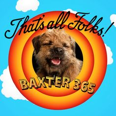 tag baxter365 13564736765 Border Terrier, Little Brown, Brown Dog, Terriers, Funny Dogs, Dogs And Puppies, Terrier