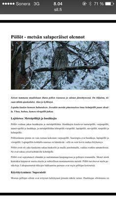 Pöllöt 1 Arts And Crafts, Sari, Outdoor, Saree, Outdoors, Outdoor Games, Art And Craft, The Great Outdoors, Saris