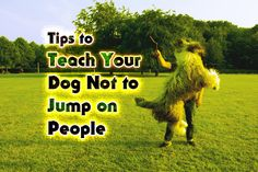 Tips to Teach Your Dog Not to Jump on People  https://thepuppyplace.org/tips-to-teach-your-dog-not-to-jump-on-people.html