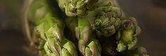 Asparagus15