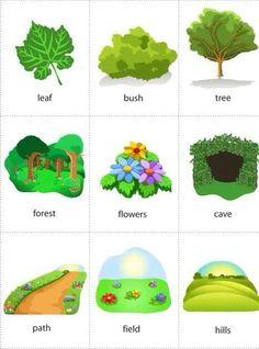 Nature - #Vocabulary #English
