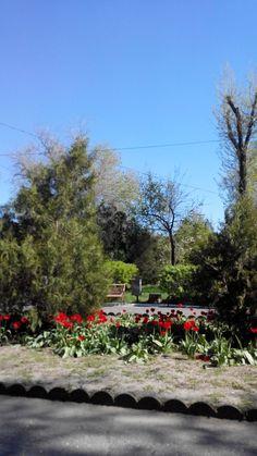 Весна в Аккермане. Пора цветения тюльпанов. Во всех садах и парках нашего города вот такие алые поляны.