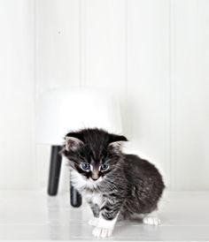 maisonsblanches:  ♫♫♫ via onlydecolove.com