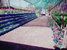 Kaptan çiçekçilik