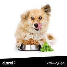 Se o seu cão tem mau hálito, acrescente um pouco de salsa fresca à sua tigela de comida.  A salsa possui altos teores de clorofila, que ajudam a tratar a halitose e a evitar o mau hálito dos cães.