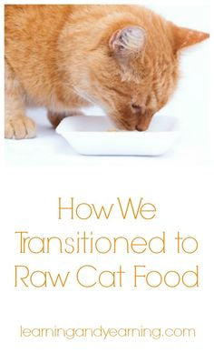 Feeding Rufus: How We Transitioned to Raw Cat Food | LearningAndYearning